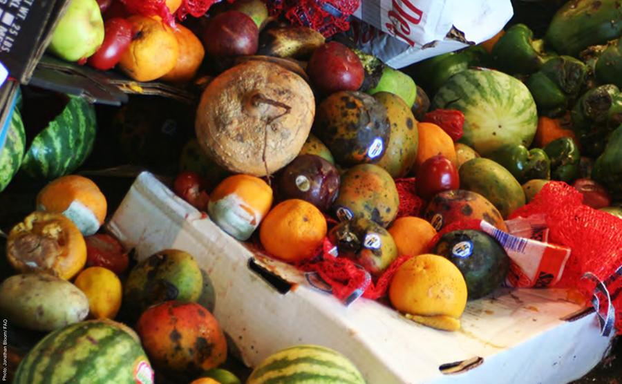 「反剩食」運動,城市食品浪費,過期食品,靈鷲山,平安禪,九大生活主張